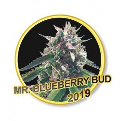 MR. BLUEBERRY BUD