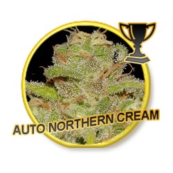 AUTO NORTHERN CREAM