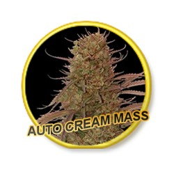 AUTO CREAM MASS
