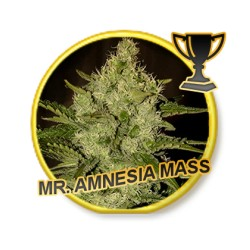 MR. AMNESIA MASS (REGULAR)