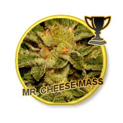 MR. CHEESE MASS REGULAR