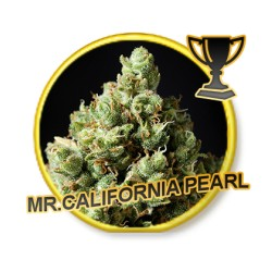 MR. CALIFORNIA PEARL REGULAR