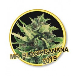 MR. BLACK BANANA REGULAR