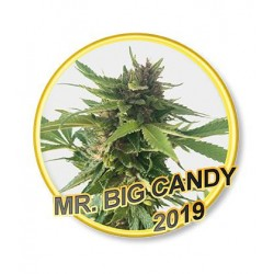 MR. BIG CANDY REGULAR