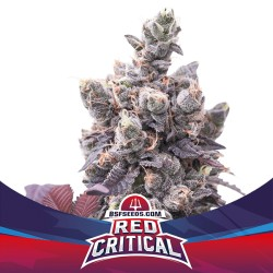 RED CRITICAL